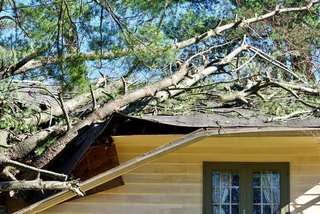 The aftermath of storm damage, with a fallen tree on the roof of a home in Peoria IL